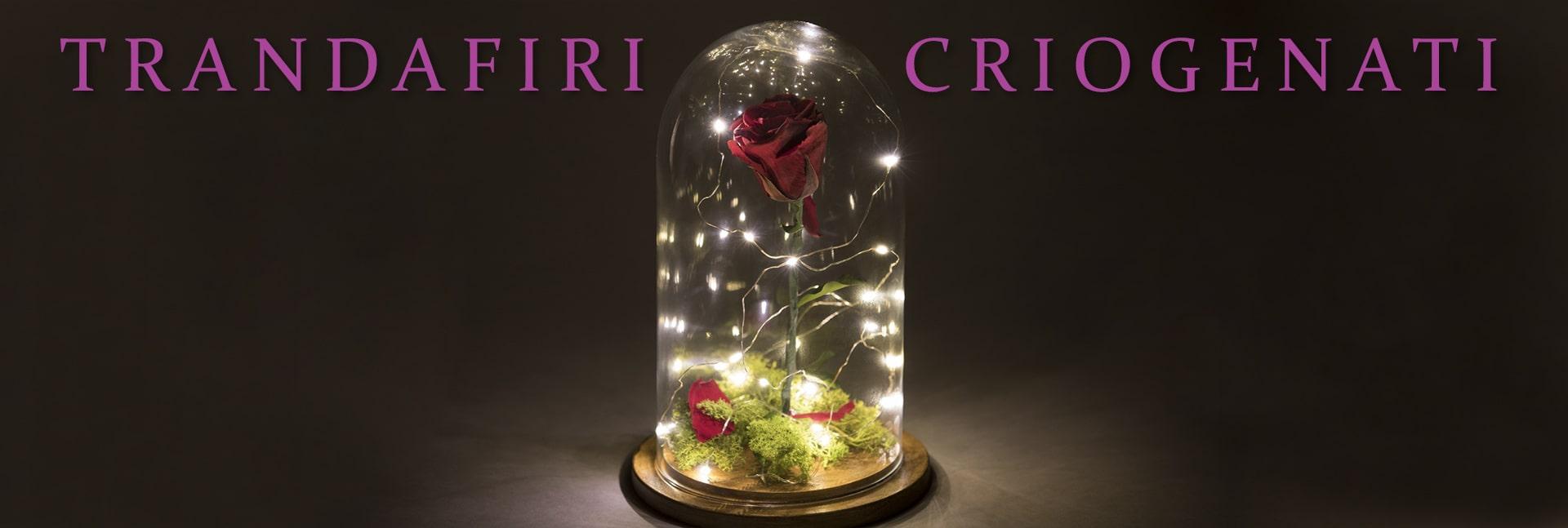 trandafiri-criogenati-1920x647
