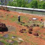 Caracteristici si avantaje ale unui acoperis verde