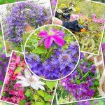 Reclamatiile Gradinamax, folositoare pentru a recomanda ce plante cățărătoare sunt potrivite pentru grădină ta